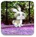 寻找复活节兔子