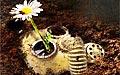 最后的鲜花