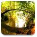 逃离春季森林