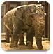 大象之家逃脱
