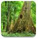 逃离茂密的森林