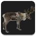 圣诞节麋鹿救援