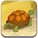 乌龟房间大逃脱