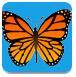 蝴蝶記憶卡