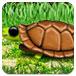 乌龟顶炸弹
