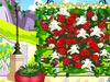 芳香玫瑰花园