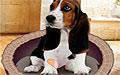 狗狗心理測試